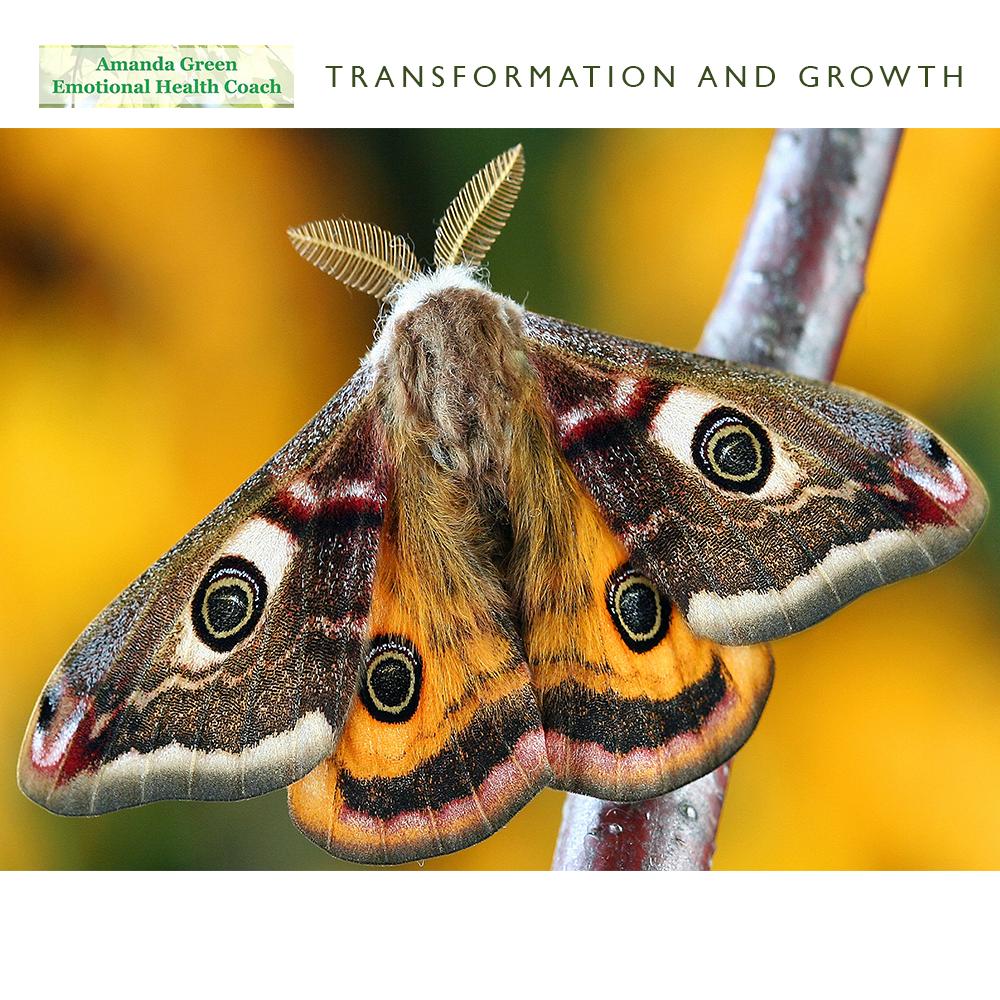 Amanda Green Emotional Health Coach Transformation and Growth Blog